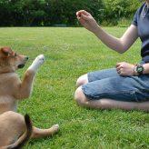 Jak vycvičit psa