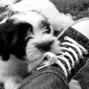 Jak odnaučit psa kousat