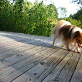 Epilepsie u psů