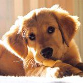 Krmení psů: Jak často krmit psa