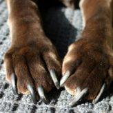 Jak na stříhání drápků u psů