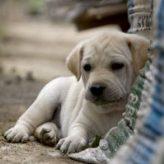 Jak často krmit štěně