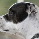 Lymfom u psa