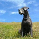 Největší pes na světě